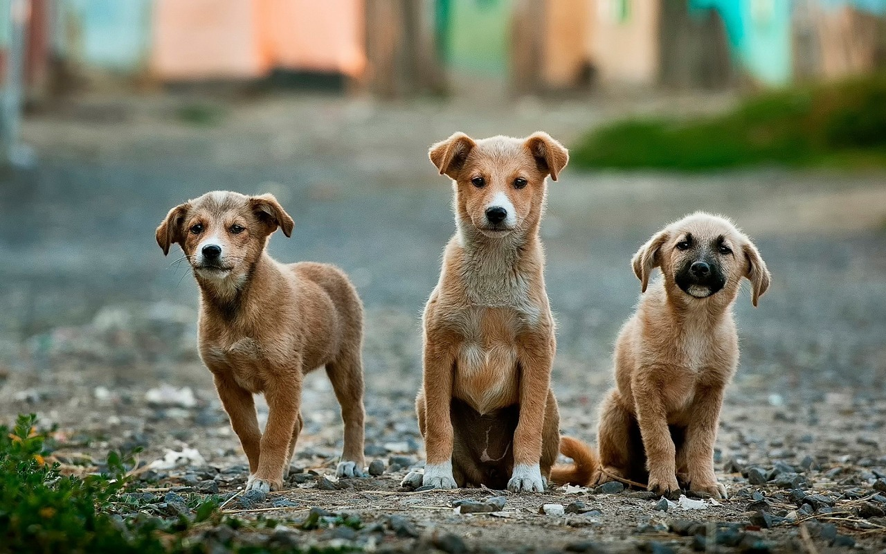 dogs-984015_1280